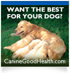 Want the best for your dog?