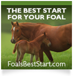 FoalsBestStart.com